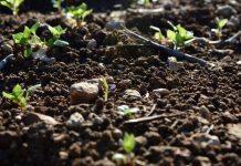 Ver de terre dans le sol