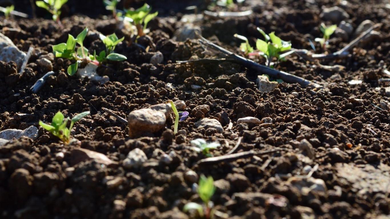 Quel est le rôle des vers de terre pour le sol ? - Sol Vivant