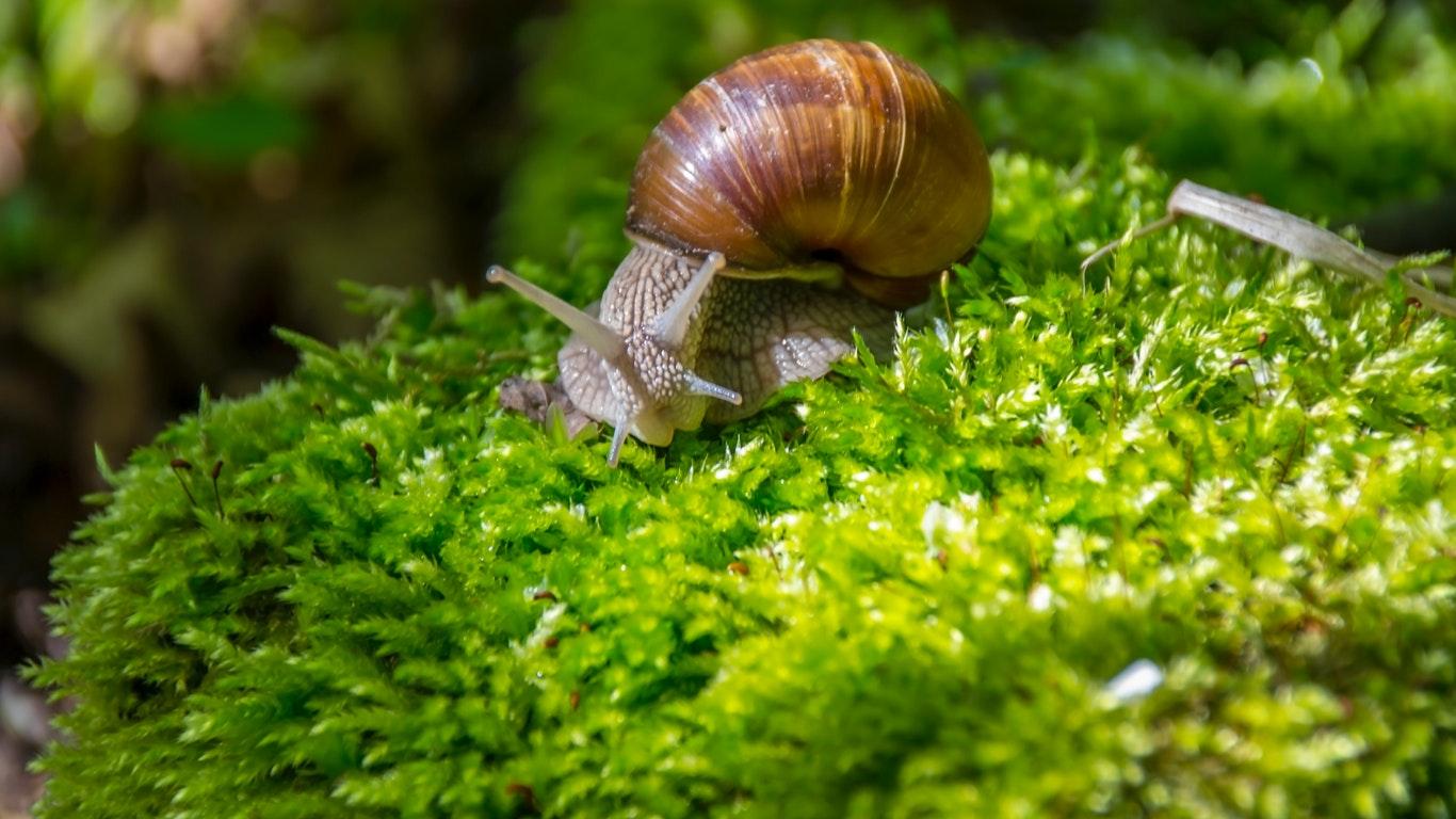 Comment Éloigner Les Fourmis Naturellement comment éliminer les limaces et escargots naturellement