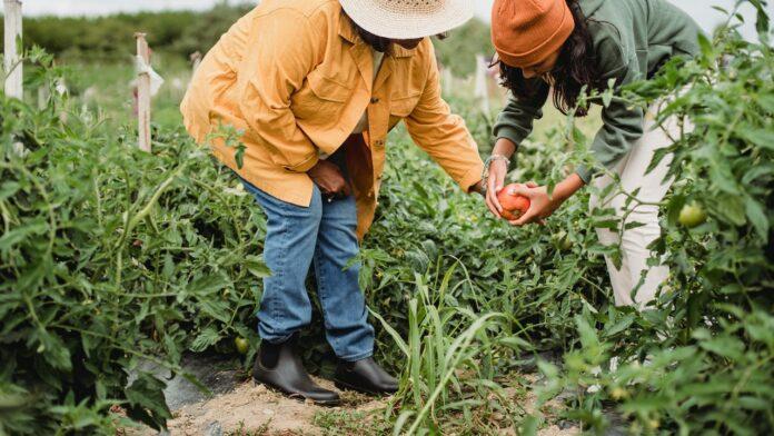 Techniques de jardinage pour la permaculture